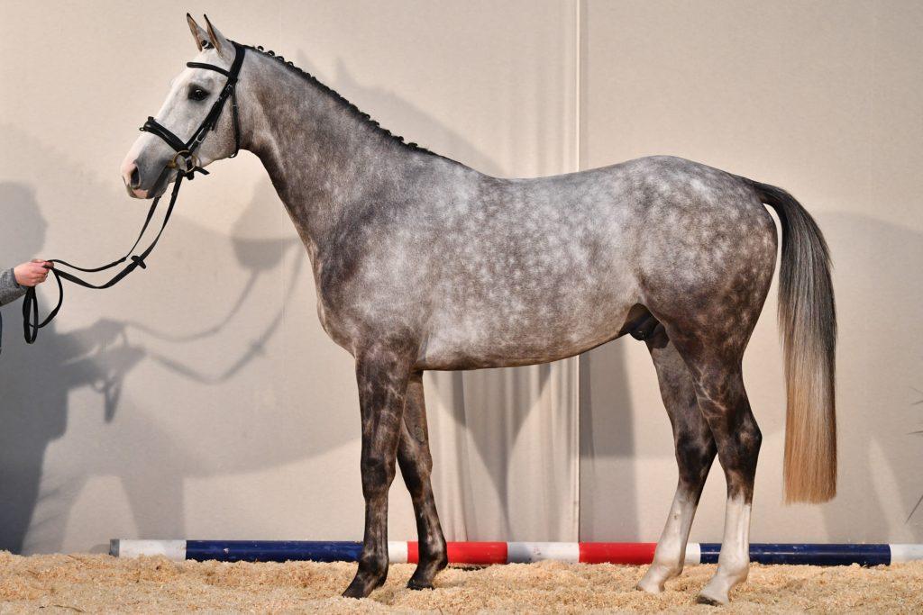 profil Hautbois d'Olympe AA
